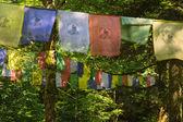 Buddhist prayer flags in the forest of tibet. — Zdjęcie stockowe