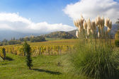 Pampas grass in a garden in the alps of France. — Stock Photo