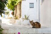 Típico na cyclades: gatos selvagens na estrada. — Foto Stock