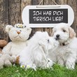 Two little baby dogs kissing: funny greeting card for wedding or — Stock Photo