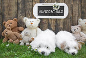 Two little  puppies with teddy bears and a wooden sign on the ba — Foto Stock