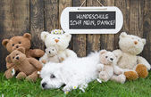 Funny little whelp  lying relaxed in grass with teddy bears and  — Stock Photo