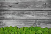 Grey wooden background with green moos. — Stock Photo
