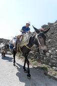Old lady on her donkey — Stock Photo