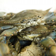 Fresh crabs at a fish market — Stock Photo
