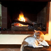 Cat in front of fireplace — Stok fotoğraf