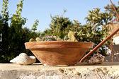 Piatto decorativo con cactus — Foto Stock