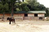 Ponies at a farm — Stockfoto