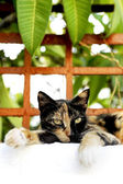 Cat lying on a fence — Stockfoto