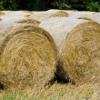 Stock Photo: Hay harvest
