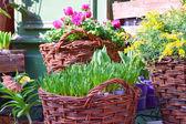 Florist — Stockfoto