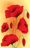 Papaver poppy flowers — Stock Vector