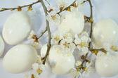 Egg easter spring flowers — Stock Photo