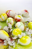 Velikonoční vajíčko malování aerosolové květiny meruňka — Stock fotografie