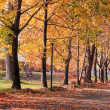 autumn colors in the park — Stock Photo