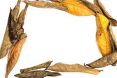 Frame made of leaves isolated — Stock Photo