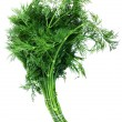 Dill fresh — Stock Photo