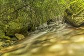 Forrest stream — Stock Photo