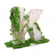 Letter K threads covered with ivy isolated on white background — Stock Photo