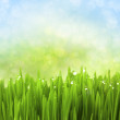 Green Grass with Water Drops on Abstract Bokeh Background — Stock Photo