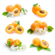 Apricots collection — Stock Photo