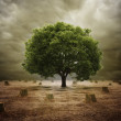 Lonely tree in a deforested landscape — Stock Photo