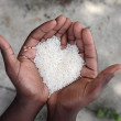 Hands holding rice — Stock Photo