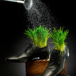 Shoes are pouring from watering can Green grass is growing — Stockfoto