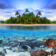 Marine life at tropical island of Maldives — Stock Photo