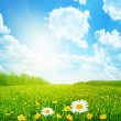 Field of spring flowers and sun on blue sky — Stock Photo