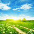 Summer field with road and sun in blue sky — Stock Photo