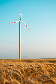 Wind power plant in wheat grain field — Stock Photo