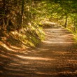 Path in the forest — Stock Photo
