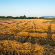 Harvested field — Stock Photo #37466259