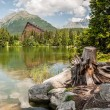 Pond in mountains at summer — Stock Photo #37471191