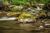Creek, rocks and vegetation — 图库照片