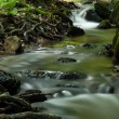 Creek in the forest — Stock Photo #38478839
