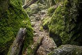 Czech National Natural Heritage Rudice Basin — Stock Photo