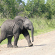 Stock Photo: Wild africelephant