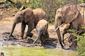 Wild african elephants — Stock Photo