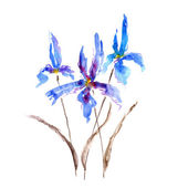 Watercolor iris flower — Stock Photo