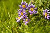 Purple flowers grow in the green grass — Stock Photo