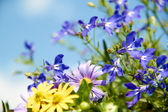 Blue and yellow flowers in the garden — Stock Photo