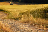 Landscape, golden fields and road, background  — Stockfoto