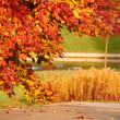 Autumn. Fall. Autumnal Park. Autumn Trees and Leaves — Stock Photo