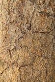 Superficie de árbol, corteza — Foto de Stock