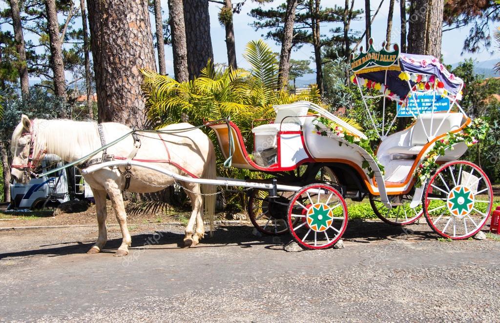 White Horse Carriage White Horse Carriage Standing