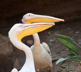 The Happy Swan — Φωτογραφία Αρχείου