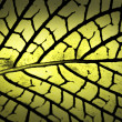 Mesh pattern on leaf — Stock Photo