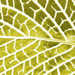 Stock Photo: Mesh pattern on leaf
